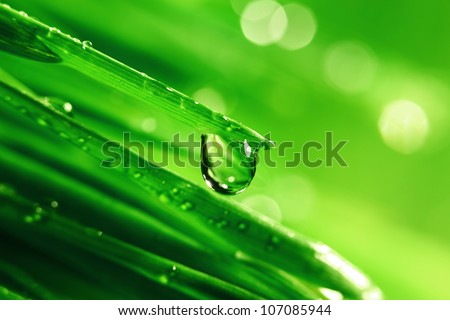 big water drop on grass blade
