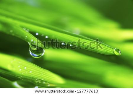 big water drop on grass blade - stock photo