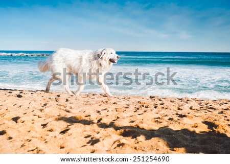 Big White Dog Is Runing On The Beach