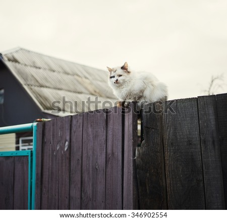 Big white furry cat on wooden fence.