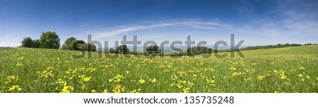 Big wide lush green meadow carpeted in fresh buttercups. - stock photo