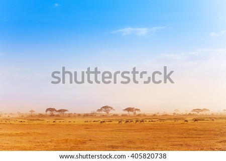 Big zebras herd in the distance of African savanna - stock photo