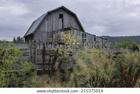Billings, Montana, USA - Derelict wooden barn surrounded by overgrown vegetation photographed on an American Indian reservation near Billings, Montana, USA. - stock photo