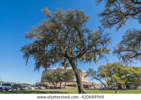 BILOXI, MISSISSIPPI - MARCH 22, 2016: Live Oak Trees on the Mississippi Gulf Coast at Biloxi. The Coast Coliseum and Convention Center is shown in the background.
