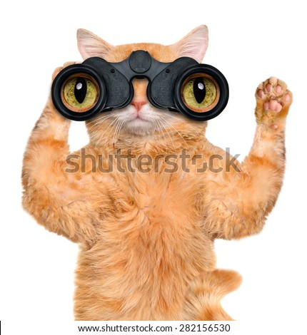 binoculars cat searching, looking and observing with care - stock photo