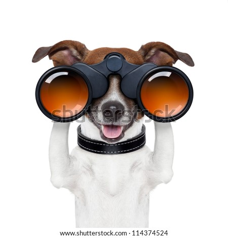 binoculars dog searching looking and observing - stock photo