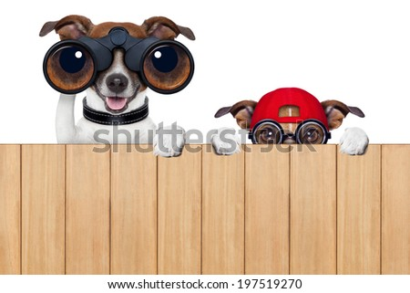 binoculars dog searching, looking and observing with care - stock photo