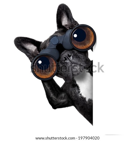 binoculars dog searching, looking and observing with care beside a white blank banner or placard - stock photo