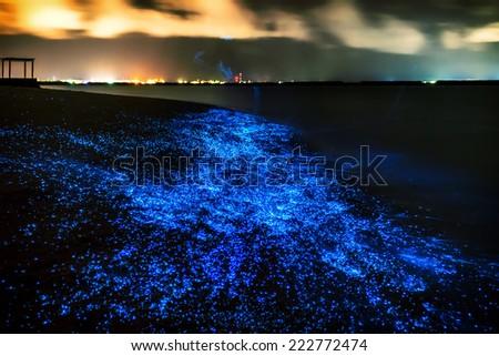 Bio luminescence. Illumination of plankton at Maldives. Many bright particles. - stock photo