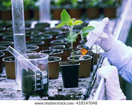 Biologist in white coat pouring liquid from syringe into flower pot with sprout in greenhouse - stock photo