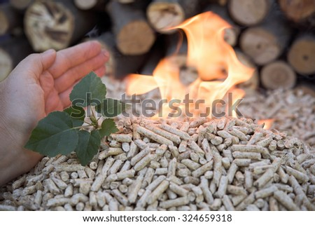 Biomass- pellets in flame and small green tree - stock photo