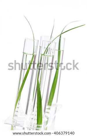 Biotechnology Research. Seedling growing in laboratory undergoing experiment - stock photo
