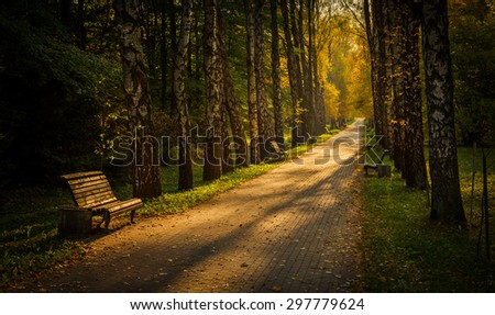 birch alley at the end of the day - stock photo