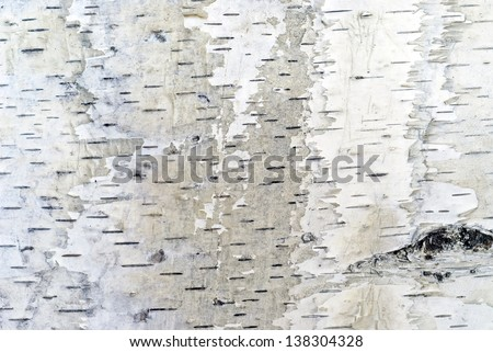 Birch bark  background - stock photo