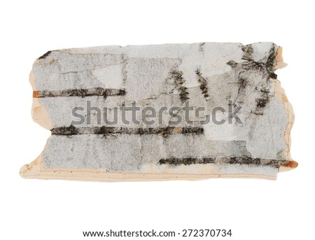 birch bark isolated on white background, with clipping path - stock photo
