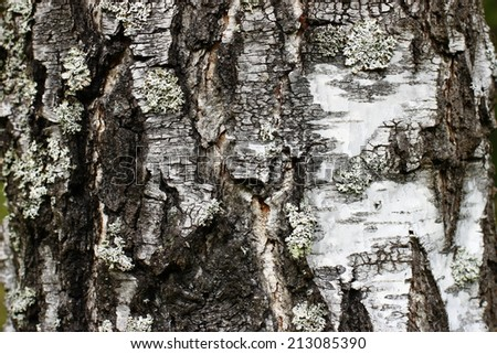 Birch bark relief in the Forest