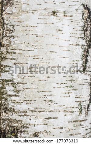 Birch bark surface background image - stock photo