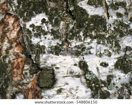 Birch bark texture natural background paper close-up.