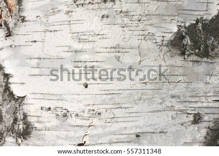 birch bark texture natural background paper close-up