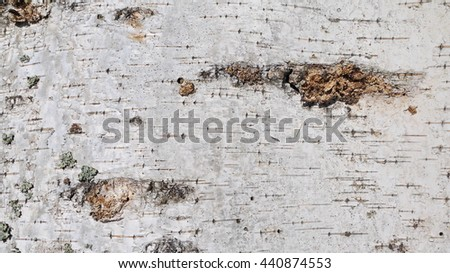 birch bark texture with twigs