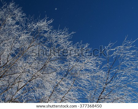birch branches covered with hoarfrost on a background blue sky