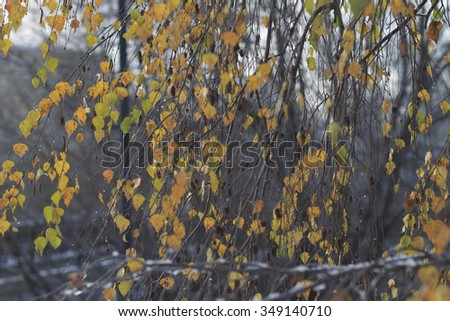 Birch branches with droplets of ice in the winter - stock photo