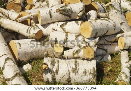 Birch firewood in heap on the ground.