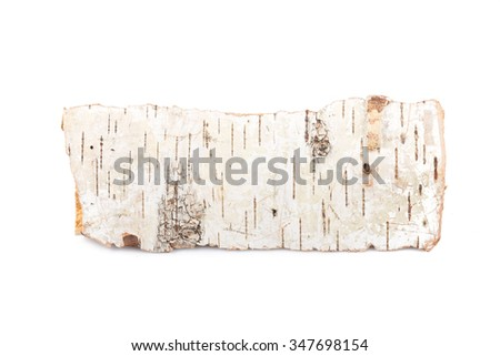 Birch firewood tree log on white background