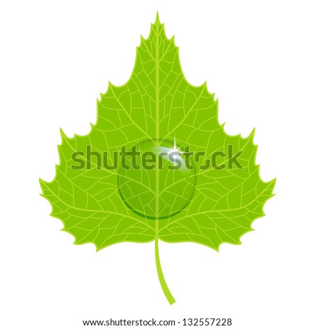 Birch green leaf with water drop. Raster version. - stock photo