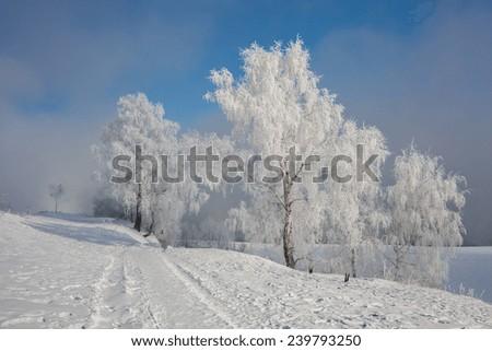 Birch tree at the river Angara - stock photo