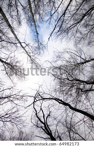 birch , tree bare against sky , forest background