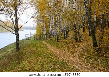 Birch with yellow leaves on the river bank - stock photo