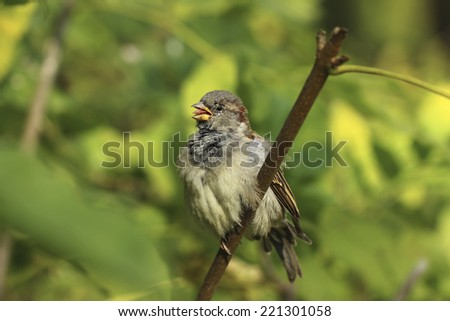 bird  - stock photo