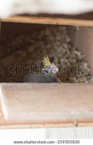 bird baby in home - stock photo