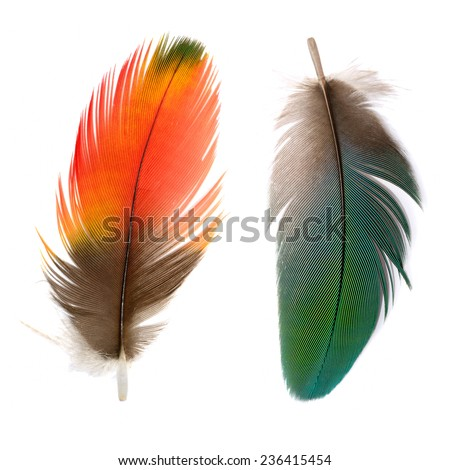 Bird, Bird feathers, Beautiful Macaw feathers - stock photo