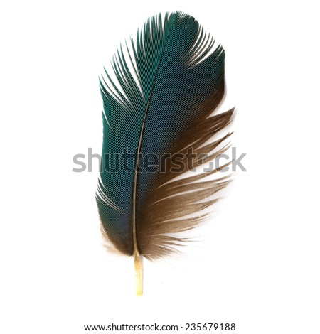 Bird, Bird feathers, Beautiful Macaw feathers, Blue and Gold  Macaw feathers - stock photo
