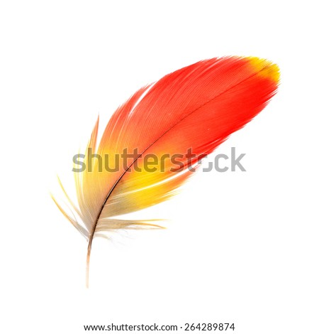 Bird, Bird feathers, Beautiful Macaw feathers, Scarlet Macaw feathers - stock photo