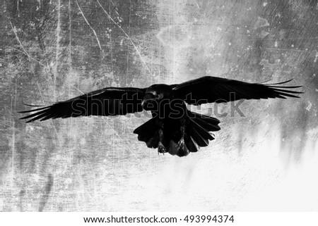 Bird Black Raven Flyin...