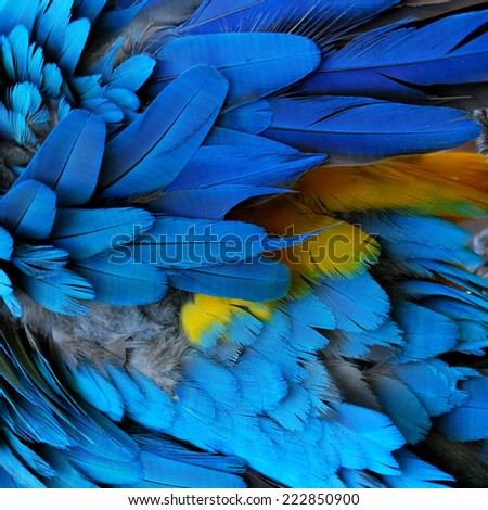 Bird, Blue and Gold Macaw feathers. - stock photo