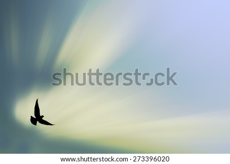bird blur background - stock photo