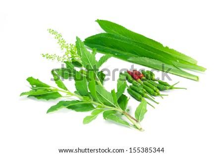 Bird chili, basil, long coriander on white background - stock photo
