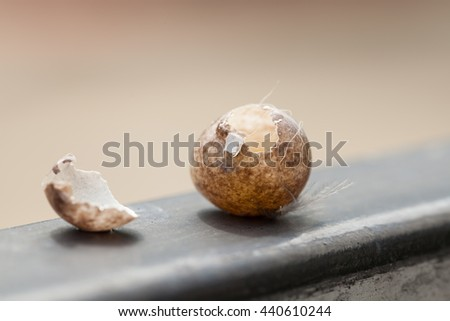 Bird eggs stolen from something. Came to the gate, Natural background