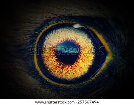 bird eye in the dark close-up - stock photo