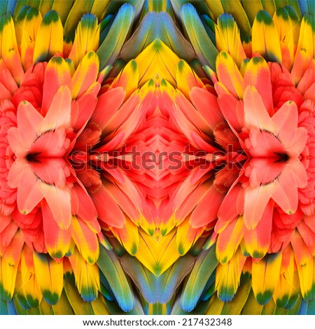 Bird feather, beautiful pattern background texture made from Scarlet Macaw feathers. - stock photo