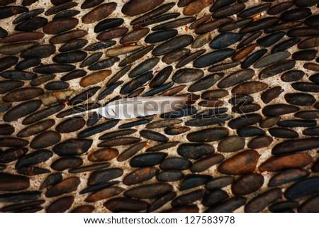 bird feather on the dark brown pebbles floor background - stock photo