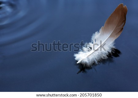 Bird feather on water surface with free space for text - stock photo