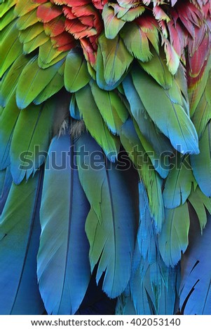 Bird feathers, Greenwinged Macaw feathers.