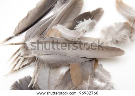 bird feathers on a white background - stock photo