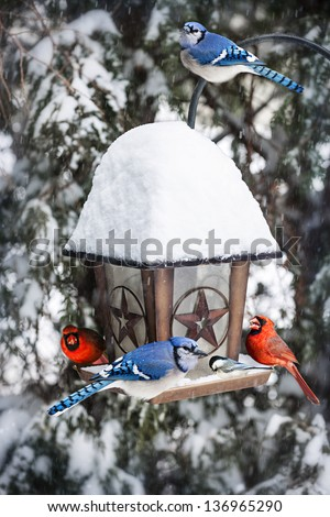 Bird feeder in winter with blue jays and cardinals - stock photo