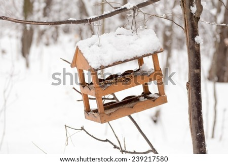 Bird feeders hanging on a tree branch in winter forest. - stock photo